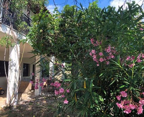 Die wundervolle Flora und Fauna der Provence lässt jedes Herz höher schlagen. Der gepflegte Naturgarten der Villa Seillans lädt insbesondere im Sommer zum Verweilen ein.